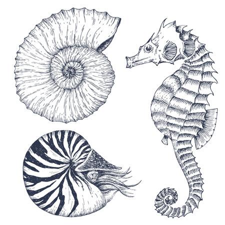 corales marinos: Imagen con buen dibujado a mano los animales marinos gráficas Vectores