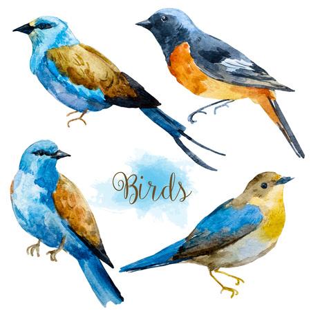 titmouse: Set with four different watercolor hand drawn birds Stock Photo