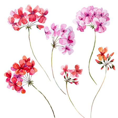 Beautiful set with nice watercolor hand drawn geranium flowers