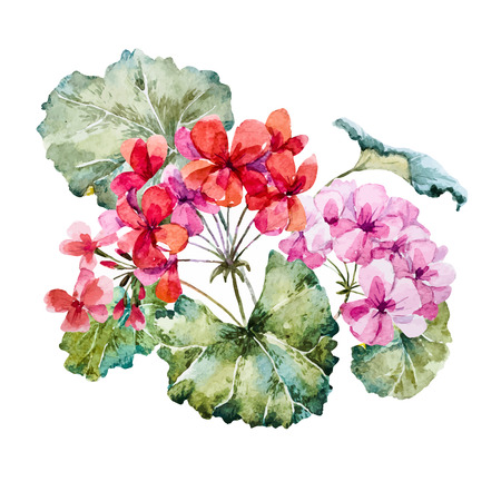 Beautiful image with nice hand drawn watercolor geranium flowers