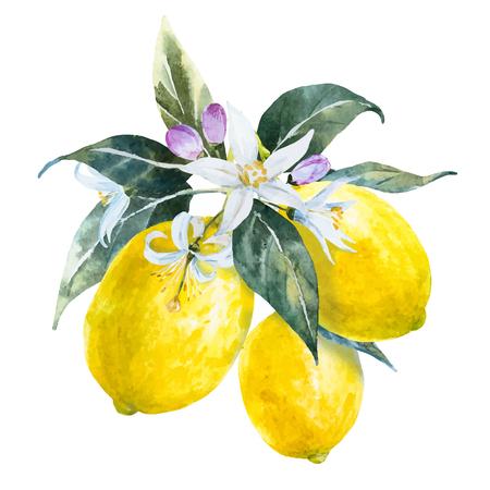 素敵な水彩画で美しいイメージの花で描かれたレモンを手します。