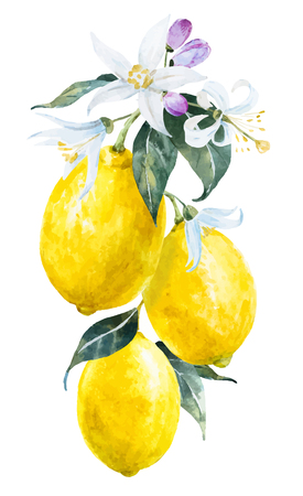 citrus tree: Beautiful image with nice watercolor hand drawn lemons with flowers