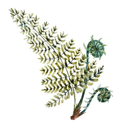 acuarela hermosa dibujado a mano hojas de helecho aislados
