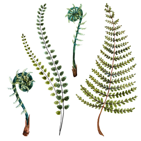famous paintings: Isolated beautiful watercolor hand drawn fern leaves