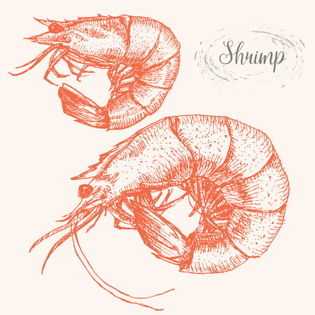 bright paintings: Beautiful image with nice hand drawn shrimps