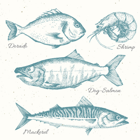 sardines: Beautiful set with nice hand drawn sea life Illustration