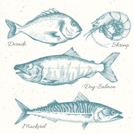 sardinas: Hermoso conjunto con un bonito de dibujado a mano la vida marina