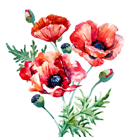 poppy flowers: Beautiful image with nice watercolor hand drawn poppy flowers Stock Photo