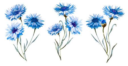 fiori di campo: Bellissimo set con alcuni disegnati a mano fiordalisi acquerello