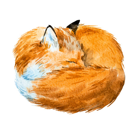 Beautiful image with nice watercolor hand drawn sleeping fox
