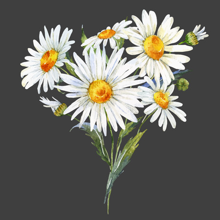 garden plant: Beautiful watercolor bouquet with hand drawn daisy