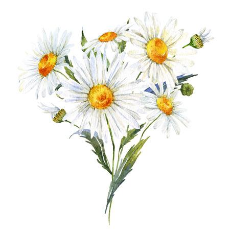 fleurs des champs: Magnifique bouquet d'aquarelle avec marguerite tirée par la main Banque d'images