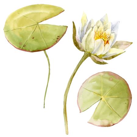 Schönes Bild mit schönen Aquarell Lotusblumen Standard-Bild - 60960707