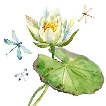 waterlily: Beautiful image with nice watercolor lotus flowers
