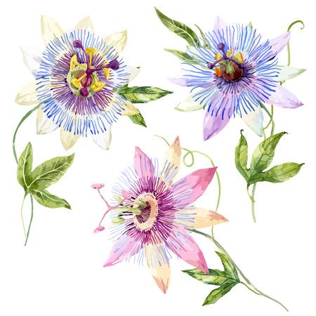 Belle image avec une belle aquarelle fleur de la passion Vecteurs
