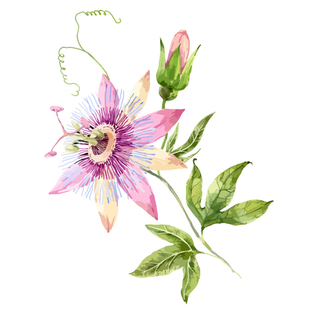 Beautiful image with nice watercolor passion flower Ilustracja