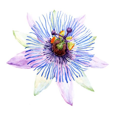 Belle image avec une belle aquarelle fleur de la passion