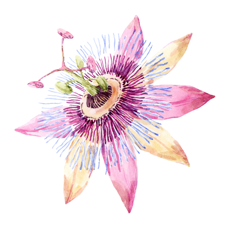 Beautiful image with nice watercolor passion flower Imagens
