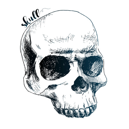 sketch drawing: Beautiful vector image with nice cartoon human skull Illustration
