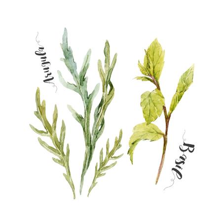 basil: Beautiful set with watercolor arugula and green basil