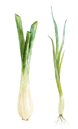 Beautiful image with nice watercolor young onion