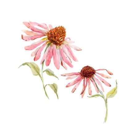 Mooie vector met waterverf roze echinacea bloem Stock Illustratie