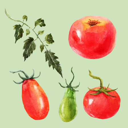 Beautiful image with nice watercolor hand drawn tomatos Illustration