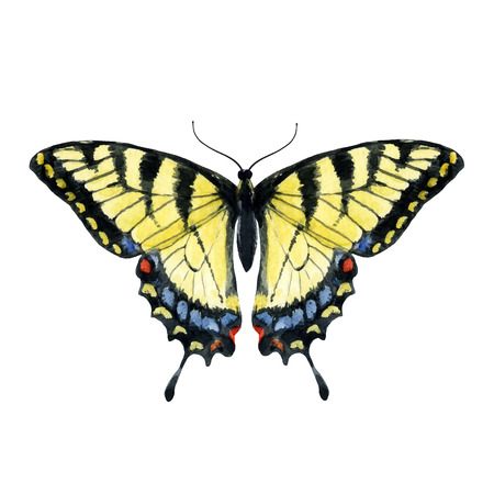 co lour: Beautiful image with nice watercolor hand drawn butterfly Illustration