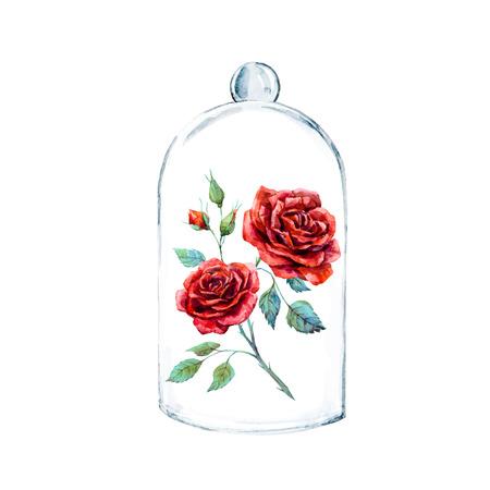 El ejemplo hermoso de la acuarela con rosa roja en una caja de cristal