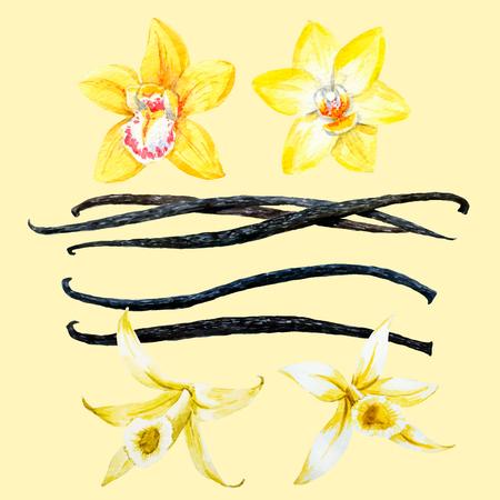 Schöne Vektor-Bild mit Aquarell von Hand gezeichnet Vanille Vektorgrafik
