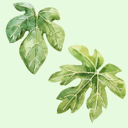 fig: Beautiful vector image with watercolor hand drawn fig leaves Illustration