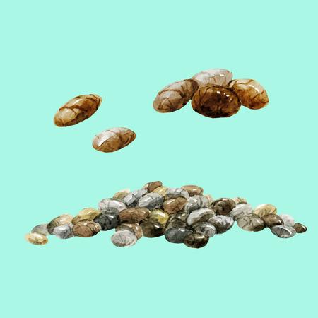 아름 다운 벡터 이미지 수채화 손으로 그려진 된 chia 씨앗