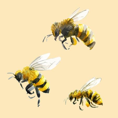 abeja: Hermosa imagen con abejas buena mano acuarela dibujado Vectores