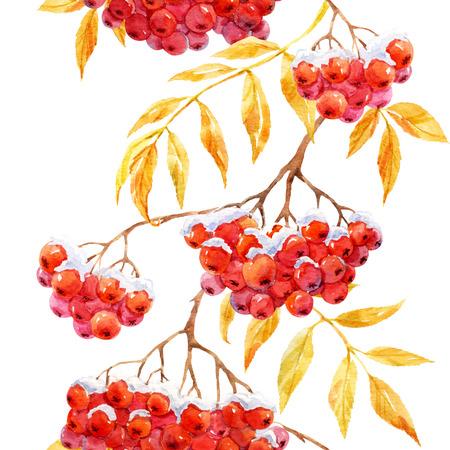 winter garden: Beautiful pattern with watercolor rowan mountain ash berries