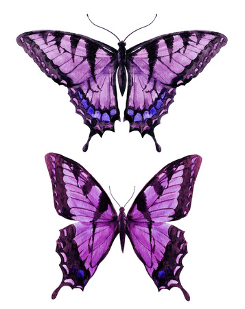 butterfly: hình ảnh đẹp với bướm đẹp màu nước vẽ tay