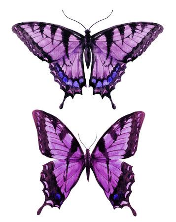 schmetterlinge blau wasserfarbe: Schönes Bild mit schönen Aquarell von Hand gezeichnet Schmetterling