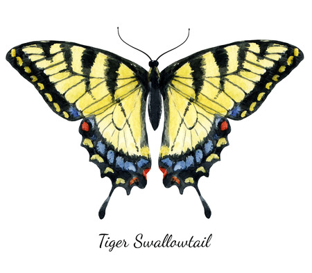Beautiful image with nice watercolor hand drawn butterfly Banque d'images