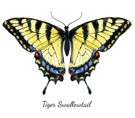 papillon: Belle image avec papillon dessiné belle main d'aquarelle