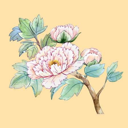 tree peony: Watercolor chinese peony flower