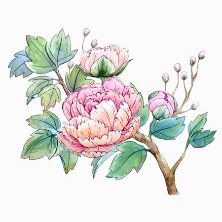 flores chinas: Acuarela de flores de peonía chino Vectores