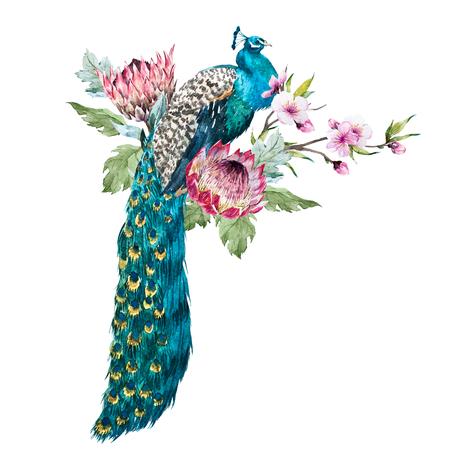Watercolor peacock with flowers Archivio Fotografico