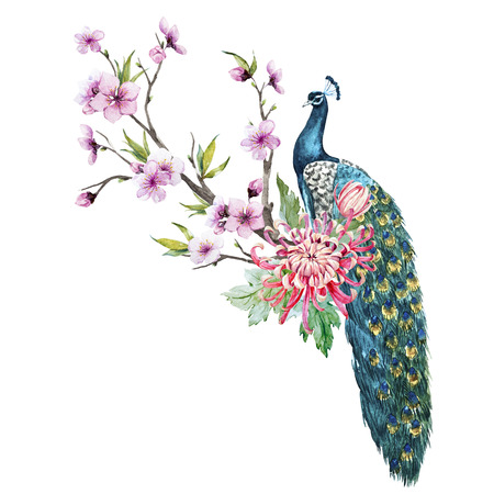 Watercolor peacock with flowers Stock Photo