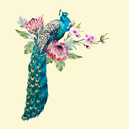 Watercolor vector peacock with flowers Illustration