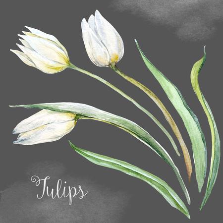 Watercolor tulip flowers Banco de Imagens