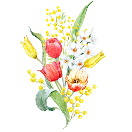 Bouquet de mimas et de tulipes Aquarelle