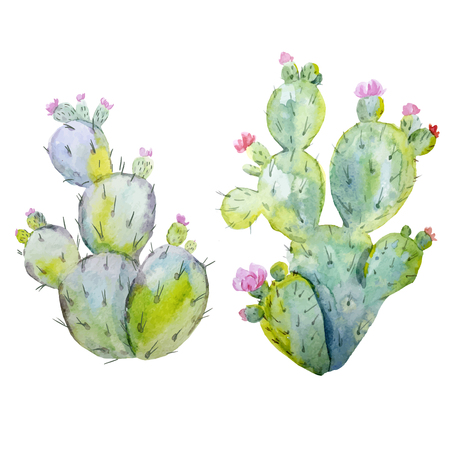 Watercolor cactus vector set