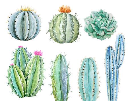 Watercolor cactus set Фото со стока