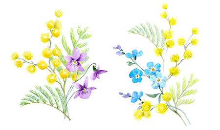 Watercolor mimosa illustration