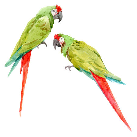 Watercolor green parrots Imagens