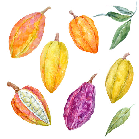 Watercolor cacao fruits set